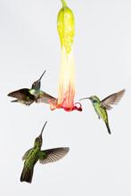 Hummingbirds Flying Around A Beautiful Flower
