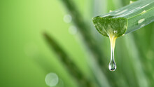 Aloe Vera Leaf Leaf With Dripping Beneficial Liquid., Isolated On Gradient Green Background. Close-up.