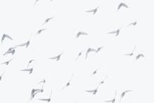 Birds Fly In Morning Haze.