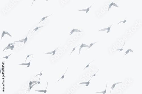 birds fly in morning haze. Fototapet