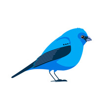 Indigo Bunting Is A Small Seed-eating Bird In The Cardinal Family, Cardinalidae. Blue Bird Cartoon Flat Style Beautiful Character Of Ornithology, Vector Illustration Isolated On White