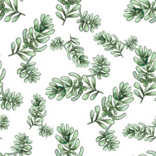 Cactus Seamless Pattern. Watercolor Pattern Of Catus On White Background. Green Thorns Mexican Succulent. Exotic Cacti Houseplant Background
