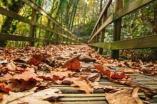 Fallen Leaves In Forest Footbridge