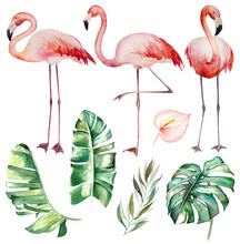 Watercolor Pink Flamingoes And Tropical Green Leaves Isolated Illustration