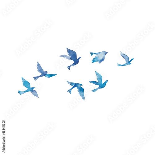 Photo 青い鳥の群れ