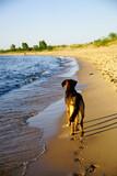 Fototapeta Fototapety z morzem do Twojej sypialni - Kundelek na plaży