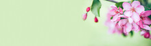 Blooming Branch With Pink Blooming Flowers On A Gentle Green Background With Sparkles. Copy Space Natural Background