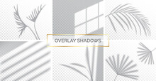 Set Of Shadows, Overlay Effects Mock Up, Window Frame And Leaf Of Plants, Natural Light, Vector Illustration.