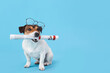 Cute dog with newspaper and glasses on color background