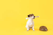 Cute Dog With Newspaper And Hat On Color Background