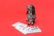 Leinwandbild Motiv Cute dog with newspaper on color background