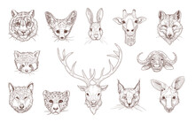 Portraits Of Different Wild Animals Engraved Illustrations Set. Hand Drawn Sketch Of Heads Of Red Panda, Giraffe, Fox, Tiger, Deer Isolated On White Background. Wildlife, Nature, Animals Concept