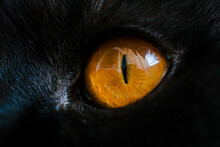 Yellow Cat Eye Close Up. Eye Macro Texture And Detail. Deep Male Look With Black Fur. High Quality Photo