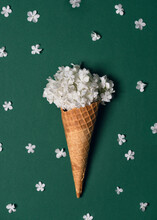 Creative Still Life Of An Ice Cream Waffle Cone With White Blossom Of Snowball On Green Background. (Viburnum Opulus Roseum) Top View.