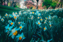 Spring Flowers, Cherry Blossoms, Nature, Spring Nature Colors