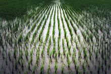 Saitama Rice Field