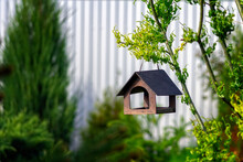 Bird Feeder In The Garden On A Tree Branch. A Photograph With Rich Contrast. Wooden House For Birds On The Background Of Green Trees.