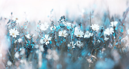 Misty morning in the meadow soft flowers background