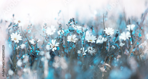 Fotografia Misty morning in the meadow soft flowers background