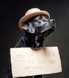 Leinwandbild Motiv Proud and fashionable labrador retriever with hat and cartoon sign