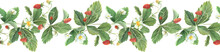 Watercolor Border Of Wild Strawberry Leaves, Berries And Flowers