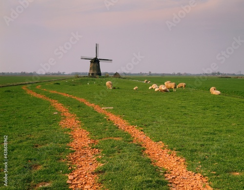 Fotografie, Obraz netherlands, polder landscape with windmill and, grazing sheep, europe, windmill