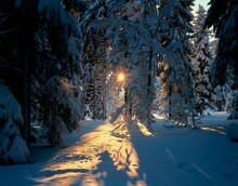 Winter Forest, Backlight, Season, Winter, Forest, Snow, Snowy, Trees, Conifers, Sun, Landscape, Nature,
