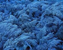 New Zealand, Ferns, Hoarfrost, Plants, Frozen, Freeze, Nature, Cold, Frost, Season, Winter, Chill, Icy, Vegetation,