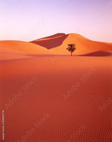 desert, sand dunes, date palm, Fototapet