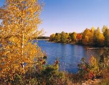Finland, Lake, Shore, Trees, Autumn, Lakeside, Water, Nature, Season, Autumnal, Forest, Plants, Footbridge, Autumn Landscape, Landscape, Calm, Idyll, Loneliness, Seclusion