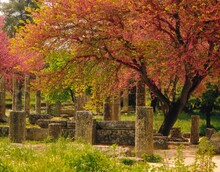 Greece, Olympia, Palestra, 3 C., Judas Trees, Blossom, Antiquity, Ruin, Temple Ruin, Training Site, Columns, Colonnade, Portico, Culture, Art, Building, Remains, Sight, Trees, Nature, Vegetation,