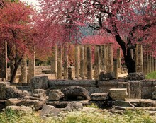 Greece, Olympia, Palaestra, 3 C., Trees, Blossom, Non-exclusive, Ancient Olympia, Ruin, Temple Ruin, Ring And, Boxing School, Portico, Remains, Sight,