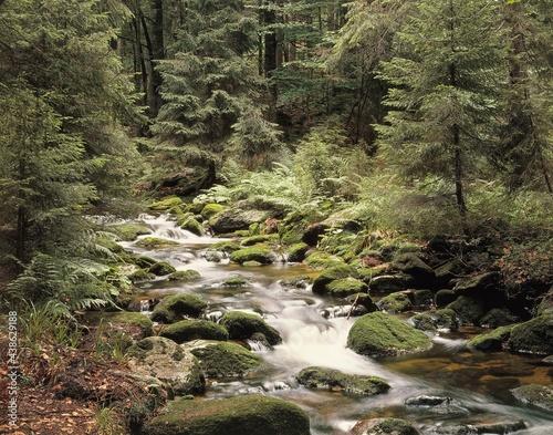Papel de parede forest, brook, summer,