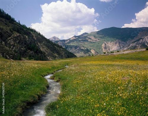 Fotografia mountain landscape, flower meadow, brook, landscape, mountains, mountain meadow,