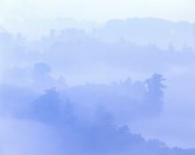 Forest Landscape, Cedars, Fog, Forest, Landscape, Trees, Nature, Plants, Cedar Forest, Coniferous Forest, Coniferous Trees, Haze, Foggy, Blue,