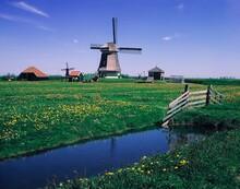 Netherlands, Polder Landscape, Alkmaar, Windmills, Holland, Mill, Landscape, Flower Meadow, Meadow, Flowers, Stream, Idyll, Romance, Nature, Vegetation,