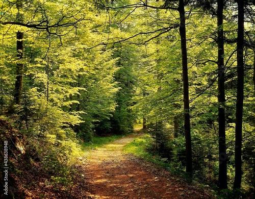 Fotografiet beech forest, path, spring, bm993,