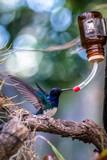 Fototapeta Rainbow - H.bird1