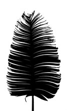 A Dry Ravenala Leaf Black And White
