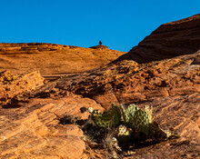 Black Crow Sitting On Top Of A Petrified Sand Dune, In Snow Canyon State Park, Utah.