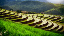 Beautiful Landscape Terraced Paddy Fields In Pa Pong Pieng, Mae Chaem, Chiang Mai, Thailand