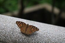 A Beautiful Brown Butterfly On A Cement Floor. A Good Ecological Animal In Nature.