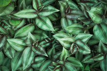 Natural Background Of Green Leaves With Vintage Filter