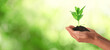 Leinwandbild Motiv Closeup view of woman holding small plant in soil on blurred background, banner design with space for text. Ecology protection