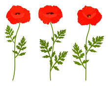 Poppies Flowers Vector Illustration. Provence Wildflowers