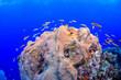 Leinwandbild Motiv Caribbean coral garden