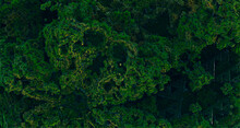Creative Tropical Forest Square Patern, View From Top. Nature Spring Concept. Flat Lay.