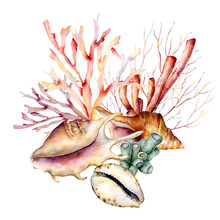 Watercolor Underwater Composition Of Coral Reef Plants And Shells. Hand Painted Tropical Card Isolated On White Background. Aquatic Illustration For Design, Print Or Background. Beautiful Wildlife.
