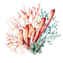 Watercolor Underwater Composition Of Coral Reef Plants. Hand Painted Tropical Card Isolated On White Background. Aquatic Illustration For Design, Print Or Background. Beautiful Wildlife.