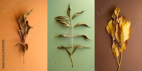 Fotografie, Obraz dry wood leaves lie on paper backgrounds, pastel colors, beige and green shades, triptych